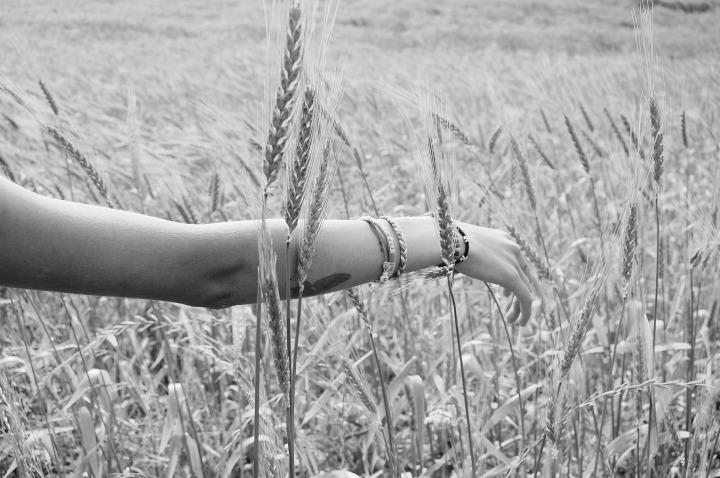 wheat-925760_1920