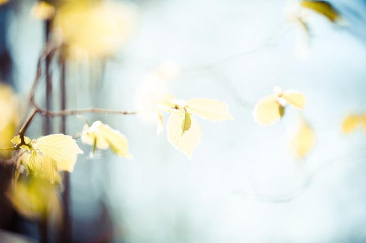 leaves-768782_1280