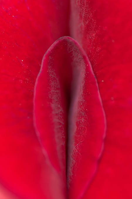 rose-143937_1280