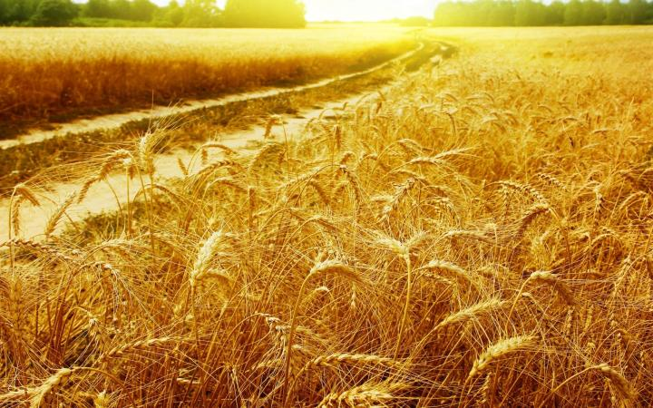 the_golden_fields