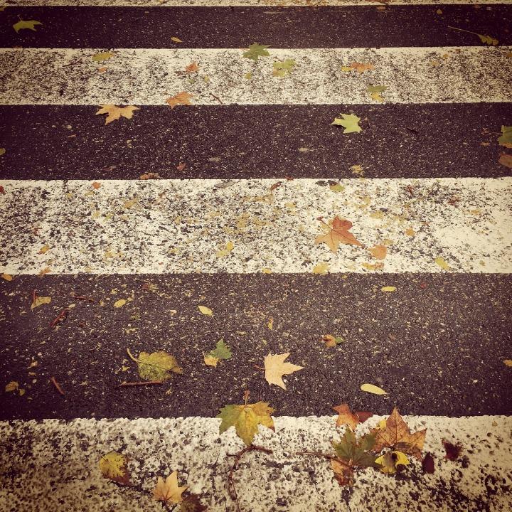autumn-898721_1280