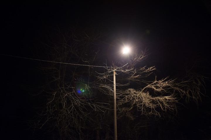 tree-925103_1920