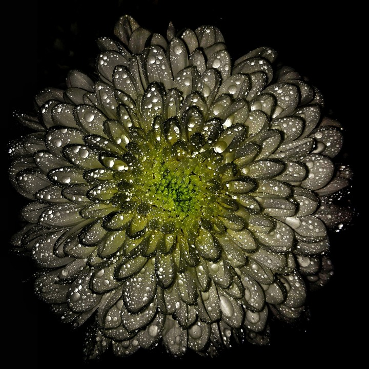 flowers-1343745_1920