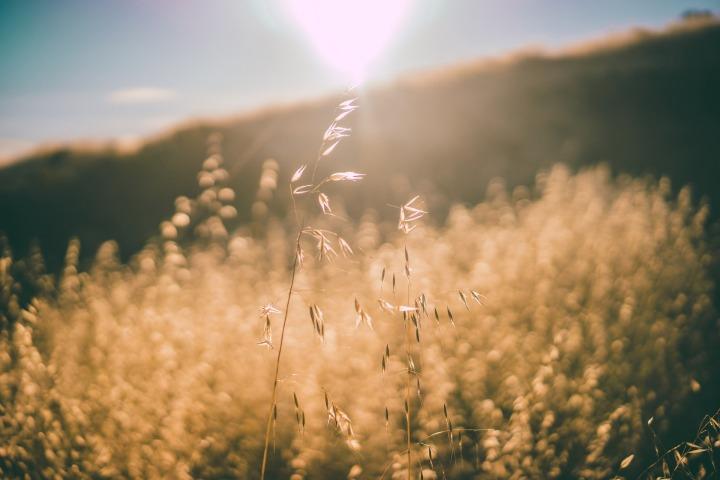 sun-rays-926501_1920