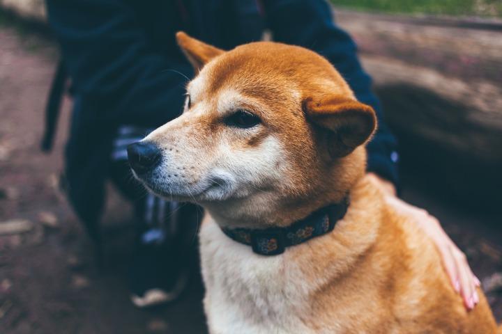 dog-1209959_1920