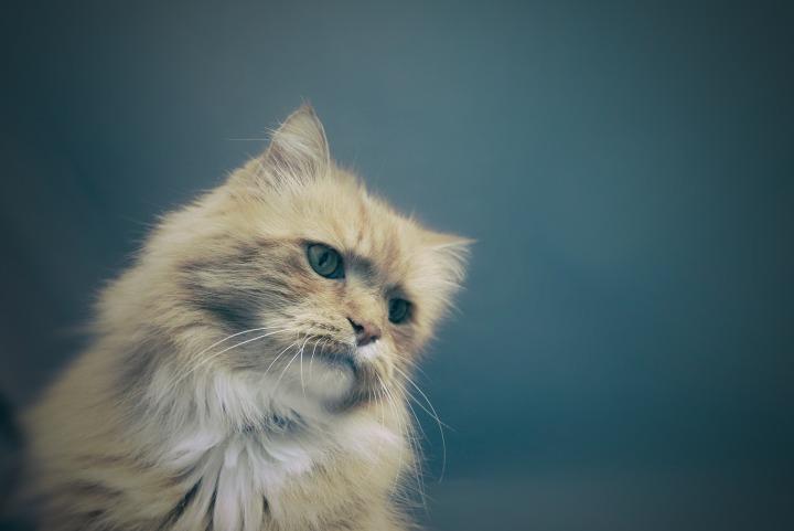 cat-1245963_1920