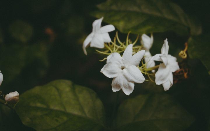 flower-1246614_1920