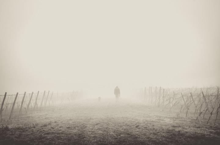 fog-1209205_1920