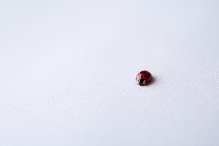 ladybug-691386_1920