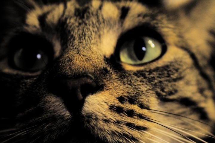 cat-2194707_1920