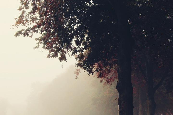 fog-1873525_1920