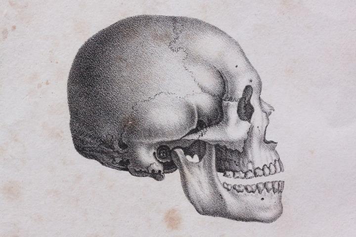 skull-1984239_1920
