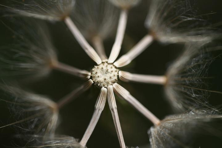 flower-2339803_1920