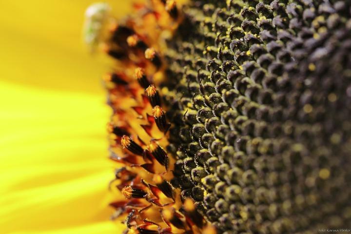 flower-179003_1920