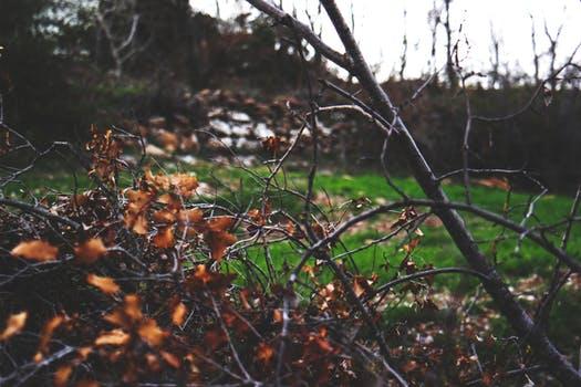 pexels-photo-68254