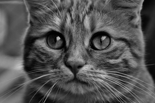 cat-2488395_1920