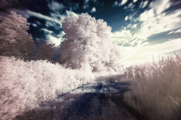 infrared-407191_1920
