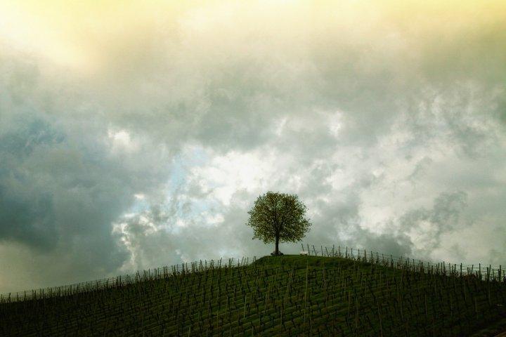 tree-207584_1920